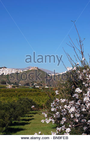 Town and castle with almond blossom trees in the foreground, Alora, Malaga Province, Andalucia, Spain, Western Europe. - Stock Photo
