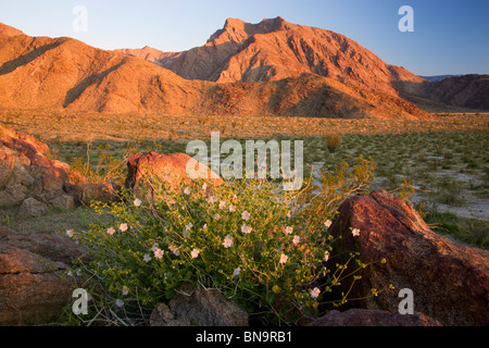 Anza-Borrego Desert State Park, California. - Stock Photo