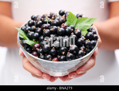 Crockery with black currant in woman hands. - Stock Photo