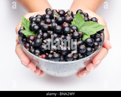 Crockery with black currant in woman hands. Isolated on a white. - Stock Photo