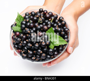 Crockery with black currant in woman hands. Isolated on a white background. - Stock Photo