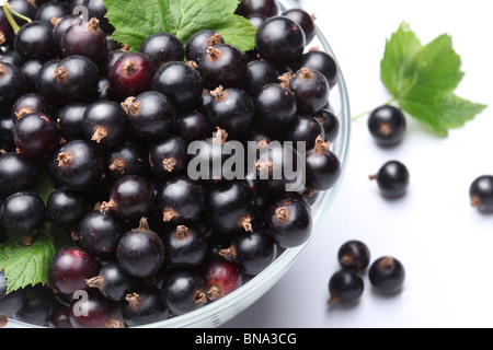 Crockery with black currant. Isolated on a white background. - Stock Photo
