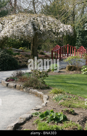 chester zoological gardens japanese style wooden bridge chester