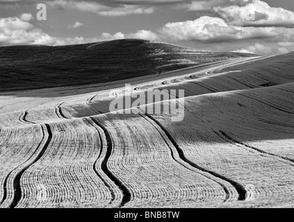 Planting lines in wheat field. The Palouse, Washington. A sky has been added. - Stock Photo