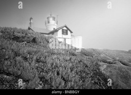 Battery Point Lighthouse with ice plants and fog. California - Stock Photo