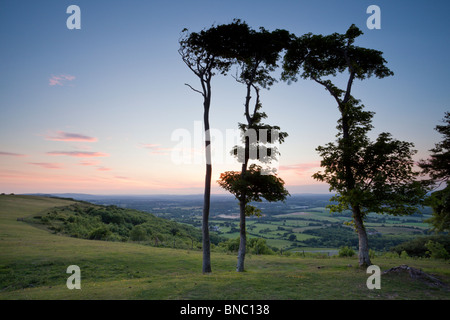 Chanctonbury Ring, South Downs National Park, West Sussex, England, UK - Stock Photo