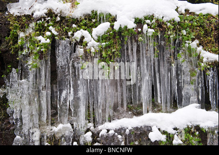 Detail of a frozen waterfall (Water-break-its-neck, New Radnor, Powys, UK). Frozen leaves and icicles - Stock Photo
