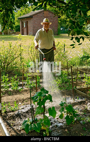 Man 50s 60s watering allotment garden, Germany - Stock Photo