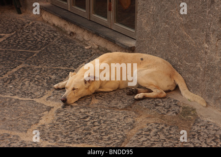Stray dog asleep Naples Italy - Stock Photo