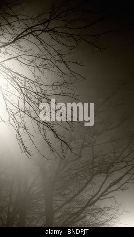 Street lamps illuminate bare tree branches against the background of fog in the dark. - Stock Photo