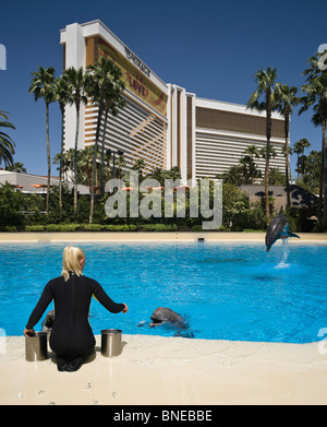 Dolphin pool at the Mirage, an MGM resort hotel on the Las Vegas strip renamed to be MGM Resorts International in - Stock Photo