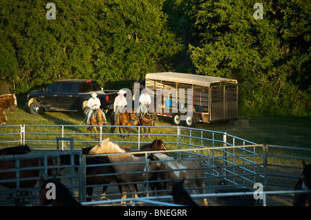 Cowboy members of PRCA riding horses backstage at rodeo event in Bridgeport, Texas, USA - Stock Photo