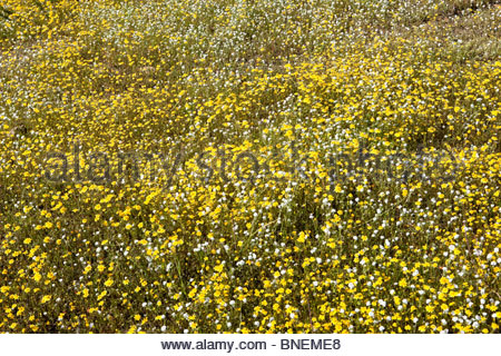 Spring Wildflowers in the Hills of Lake Elsinore, California - Stock Photo