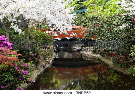 japanese garden bridge in spring descanso gardens california stock photo
