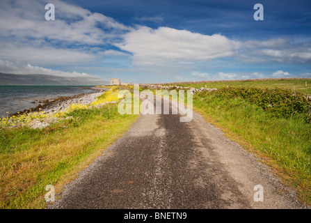 Country track, lined with yellow sea radish flowers, leading to the Martello tower at Finavarra Point, the Burren, - Stock Photo