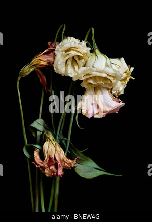A bouquet of dried dying flowers on a black background. - Stock Photo