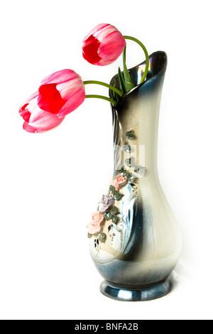Tulipa, Tulip. Flowers in studio against a white background. - Stock Photo