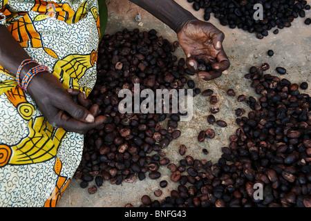 A woman sorts shea nuts in the village of Bankoumana, near Bamako, Mali - Stock Photo