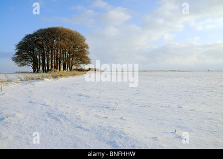A copse of bare leafless trees on the Marlborough downs with undisturbed windswept snow on the ground in winter. - Stock Photo