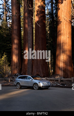 Lincoln MXT in General Grant Grove Sequoia trees in background Kings Canyon National Park CA USA - Stock Photo