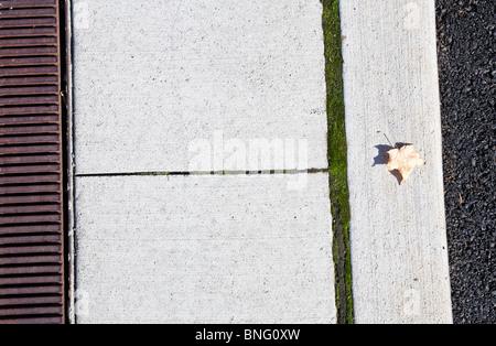 Maple leaf on a curb, Seattle, Washington State, USA - Stock Photo