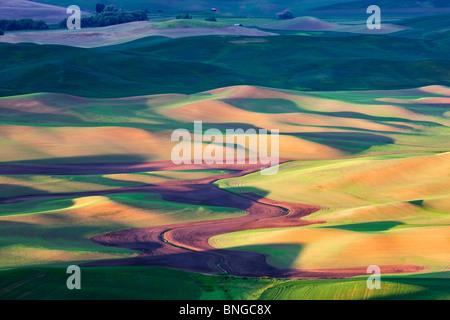 New spring wheat growth. The Palouse, near Colfax, Washington. - Stock Photo