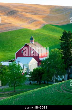 New spring wheat growth and barn. The Palouse, near Colfax, Washington. - Stock Photo