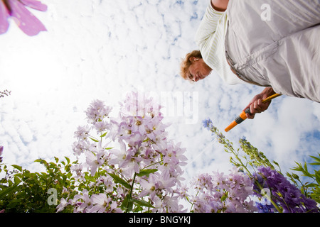 A woman in Ambleside garden uses a garden hose to water the plants on the last day before the introduction of the - Stock Photo