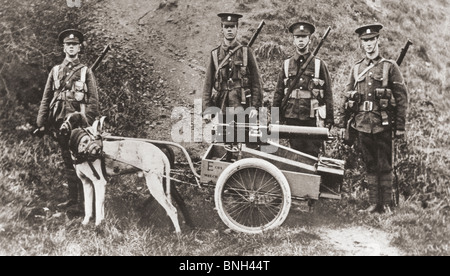 British army soldiers using dogs to pull a machine gun during world War I. - Stock Photo