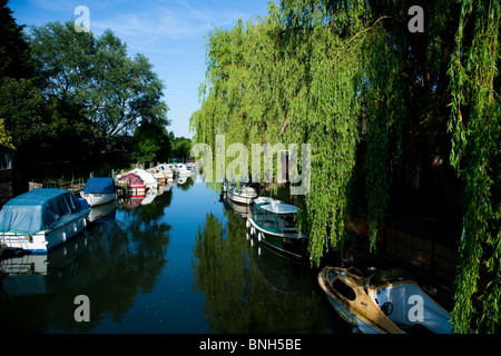 Pleasure boats moored along tree lined banks of the river Stour - Stock Photo
