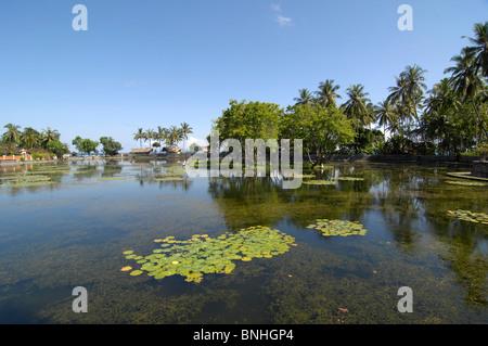 Bali Asia Indonesia travel Location Candi Dasa pond water lily lake water nature - Stock Photo