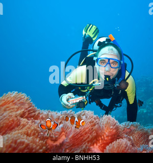 Underwater photographer and Clownfishes in their anemone - Stock Photo