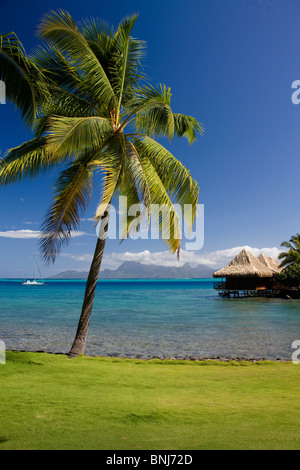 Tahiti Tahiti Nui Island Papete city sea Intercontinental Resort palm water traveling tourism holiday vacation Pacific - Stock Photo