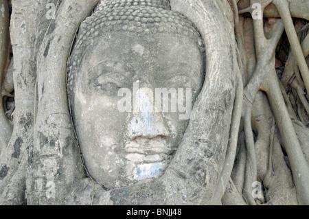 old Asian Asia outside field recording Ayutthaya Ayutthaya style tree tree of enlightenment illumination tree root - Stock Photo