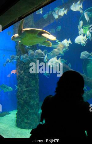 Norfolk Canyon Aquarium At Virginia Aquarium And Marine