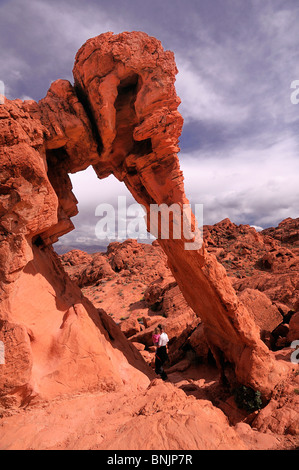 Elephant Rock Valley of Fire State Park Nevada USA North America travel America travel rocks formation red landscape - Stock Photo