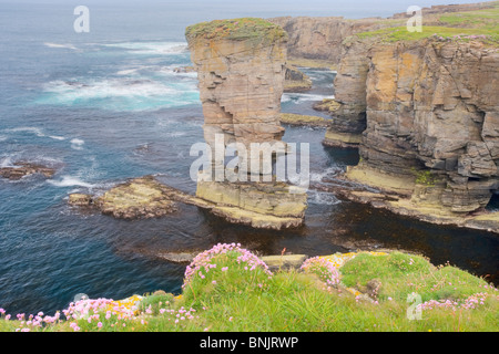 Sea stack Yesnaby Castle and cliffs Orkney Mainland LA005103 - Stock Photo