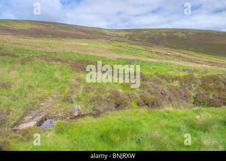 Cottascarth and Rendal Moss RSPB Reserve  Mainland Orkney LA005182 - Stock Photo