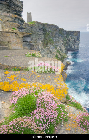 Thrift covered cliffs Armeria maritima Marwick Head RSPB reserve Building is Kitchener memorial Mainland Orkney - Stock Photo