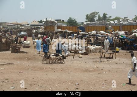 Africa, Senegal, Dakar. Capital city of Dakar. Downtown goat & sheep market. - Stock Photo