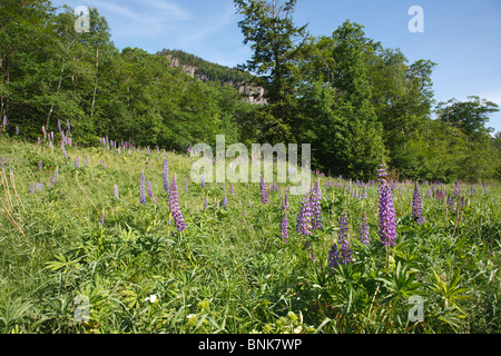Crawford Notch State Park in the White Mountains, New Hampshire USA. Frankenstein Cliff is in the background - Stock Photo