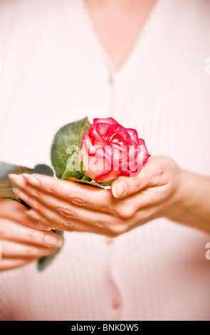 woman holding a pink rose in her hands - Stock Photo