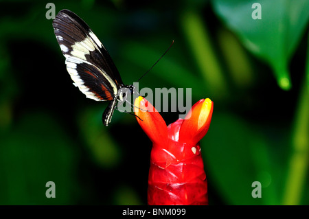 Butterfly on a red flower bulb. - Stock Photo