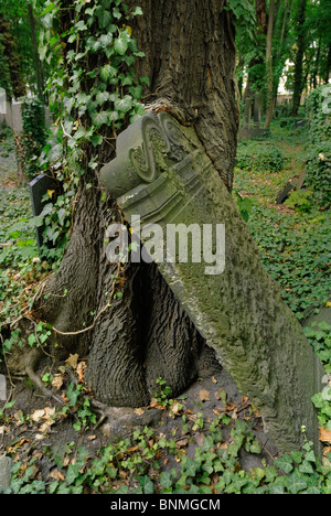 Tombstone overgrown by a tree, Jewish Cemetery Schoenhauser Allee, Prenzlauer Berg district, Berlin, Germany, Europa - Stock Photo
