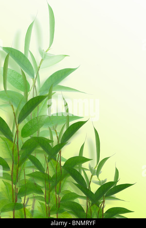 Young green plants on off white background - Stock Photo