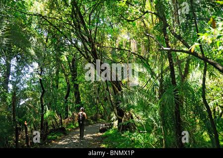 Zambesi National Park Forest Walkway Victoria Falls Matabeleland North Province Zimbabwe Africa, - Stock Photo