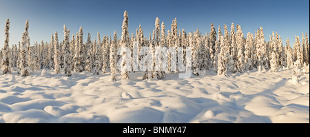 Panoramic view of snow-covered spruce trees in late afternoon sun near Chugiak, Alaska, Winter - Stock Photo
