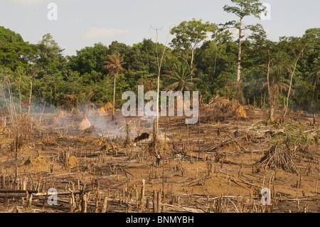 slash & burn deforestation in Liberia - Stock Photo