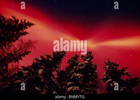 Intense Red Aurora & Spruce Trees Matanuska Valley AK - Stock Photo