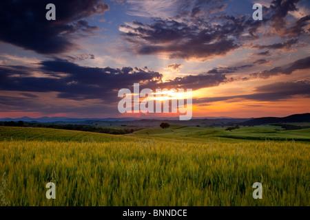 Sunset over wheat field near Pienza, Tuscany Italy - Stock Photo